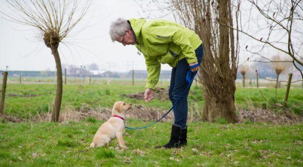 Puppycursus in Ossendrecht